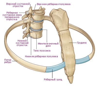 Анестезия при остеохондрозе